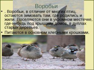Воробьи . Воробьи, в отличие от многих птиц, остаются зимовать там, где родил