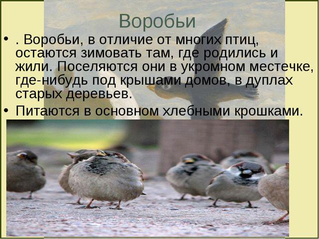 Воробьи . Воробьи, в отличие от многих птиц, остаются зимовать там, где родил...