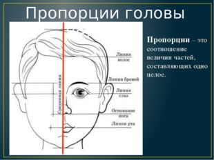 Пропорции головы человека Пропорции – это соотношение величин частей, состав