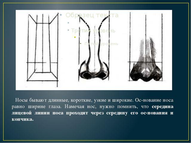 Носы бывают длинные, короткие, узкие и широкие. Основание носа равно ширине...