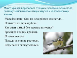 Много крошек перепадает птицам с человеческого стола, поэтому зимой многие пт
