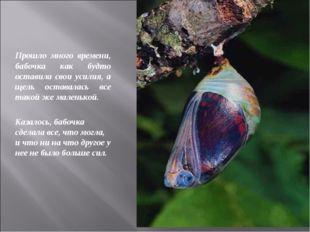 Прошло много времени, бабочка как будто оставила свои усилия, а щель оставала