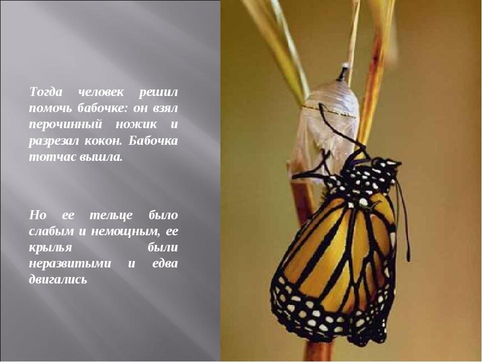 Тогда человек решил помочь бабочке: он взял перочинный ножик и разрезал кокон...