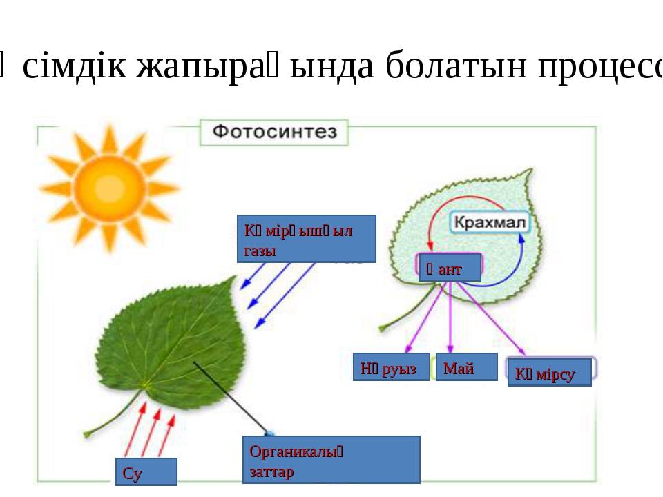Өсімдік жапырағында болатын процесс Көмірқышқыл газы Органикалық заттар Қант...
