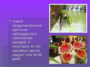 Самое продолжительное цветение наблюдается у тропических орхидей. У некоторых