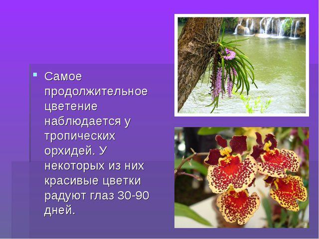 Самое продолжительное цветение наблюдается у тропических орхидей. У некоторых...