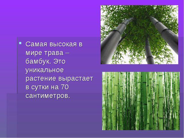 Самая высокая в мире трава – бамбук. Это уникальное растение вырастает в сутк...