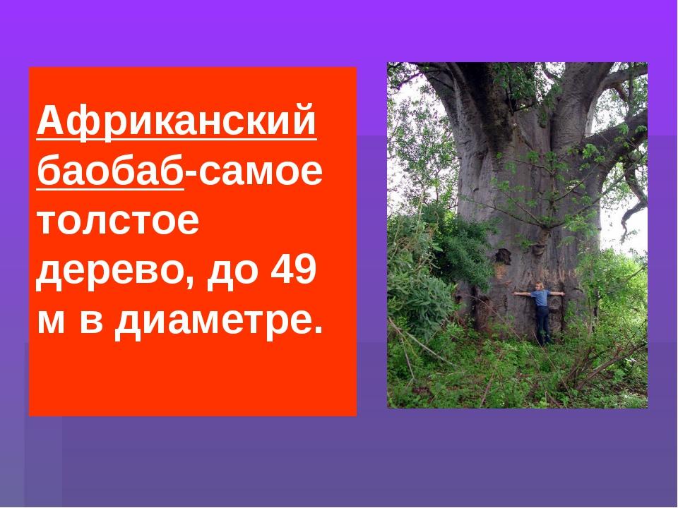 Африканский баобаб-самое толстое дерево, до 49 м в диаметре.