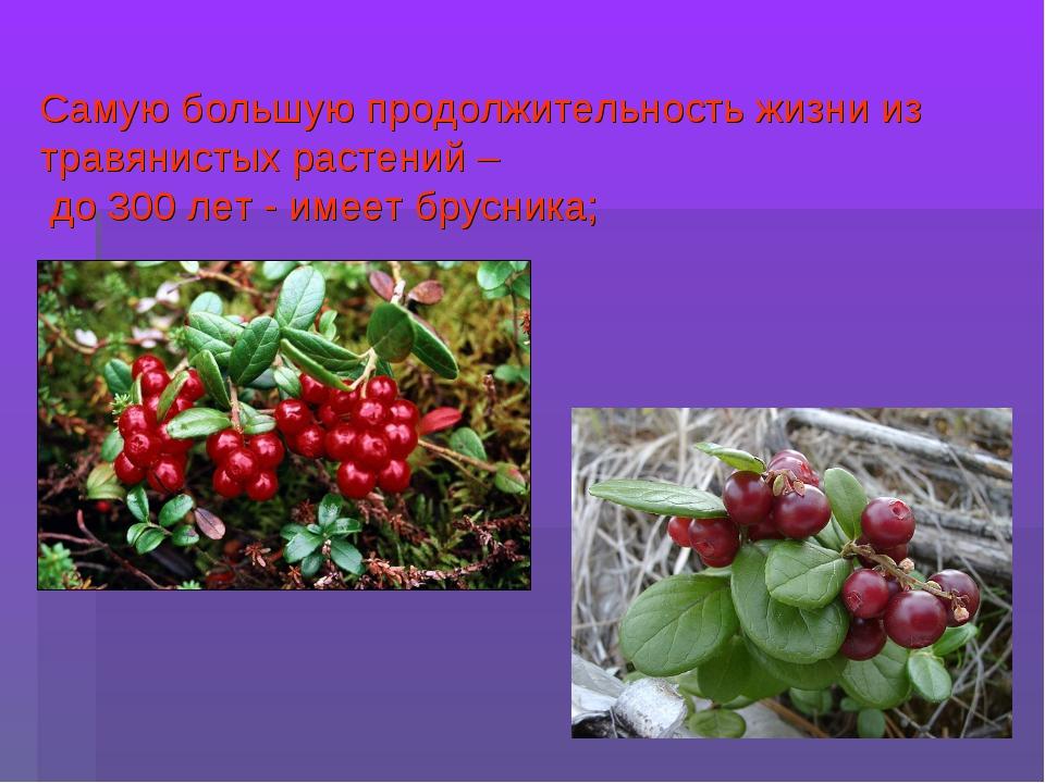 Самую большую продолжительность жизни из травянистых растений – до 300 лет -...