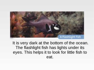 It is very dark at the bottom of the ocean. The flashlight fish has lights u
