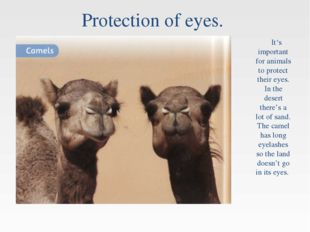 Protection of eyes. It's important for animals to protect their eyes. In the