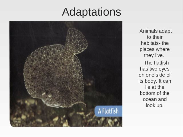 Adaptations Animals adapt to their habitats- the places where they live. The...