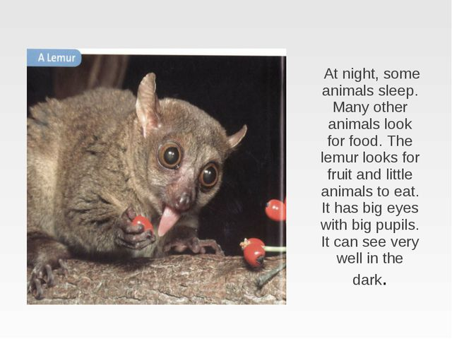 At night, some animals sleep. Many other animals look for food. The lemur lo...