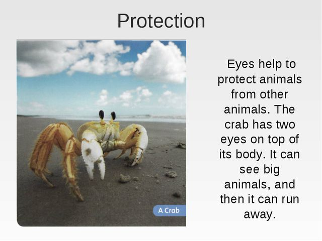 Protection Eyes help to protect animals from other animals. The crab has two...