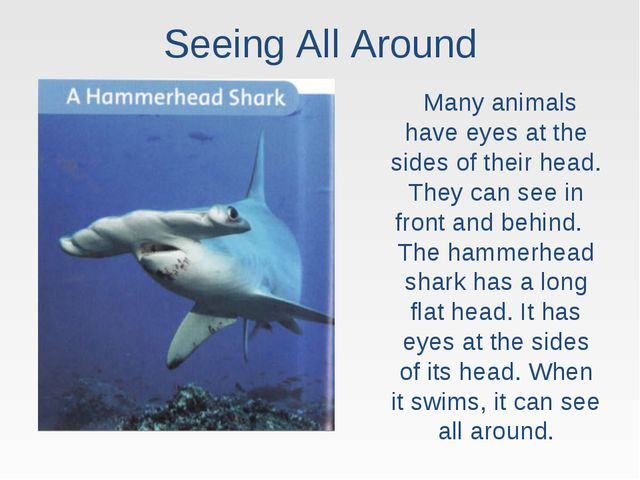 Seeing All Around Many animals have eyes at the sides of their head. They can...