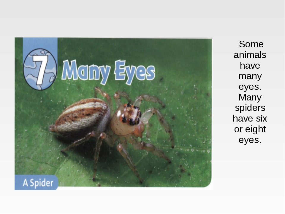 Some animals have many eyes. Many spiders have six or eight eyes.