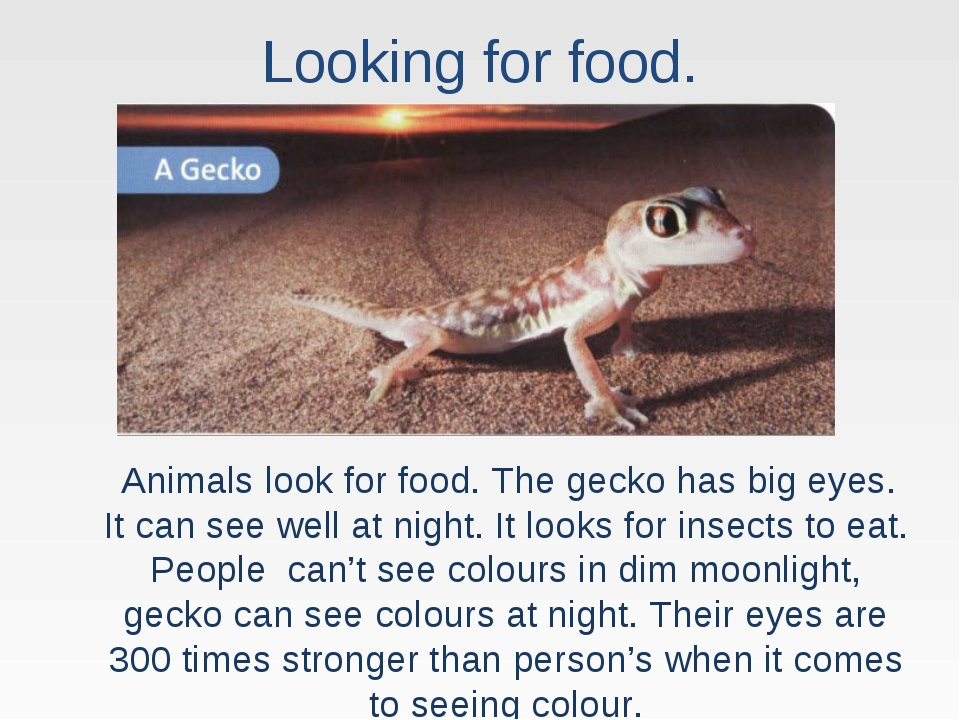 Looking for food. Animals look for food. The gecko has big eyes. It can see w...