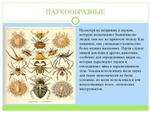 ПАУКООБРАЗНЫЕ Несмотря на неприязнь к паукам, которую испытывают большинство