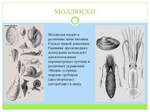 МОЛЛЮСКИ Моллюски входят в различные цепи питания. Служат пищей животным. Рак