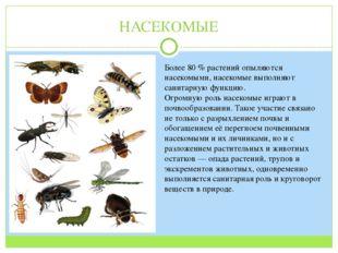 НАСЕКОМЫЕ Более 80 % растений опыляются насекомыми, насекомые выполняют санит