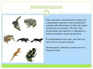 ЗЕМНОВОДНЫЕ Кожа лягушек и жаб выделяет вещества, содержащие огромное число р