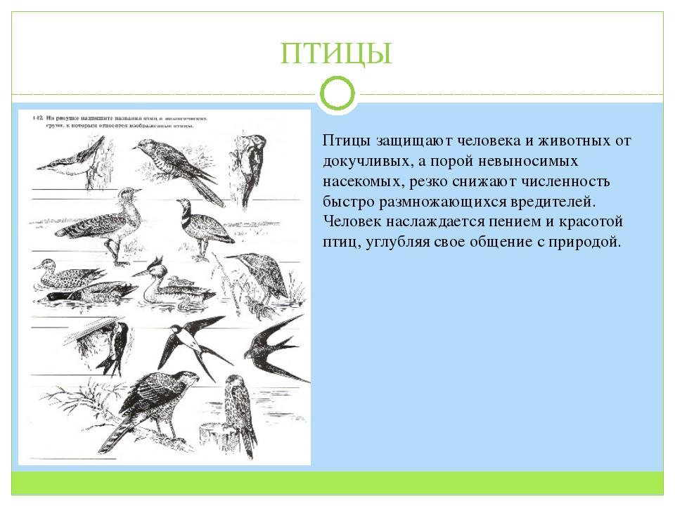 ПТИЦЫ Птицы защищают человека и животных от докучливых, а порой невыносимых н...