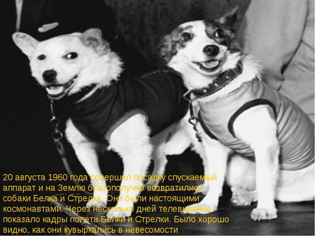 20 августа 1960 года совершил посадку спускаемый аппарат и на Землю благополу...