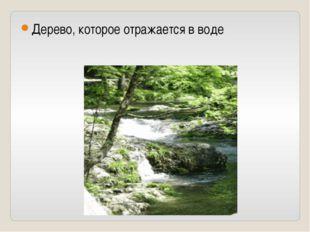 Дерево, которое отражается в воде