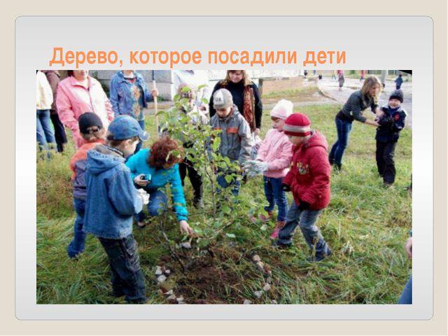 Дерево, которое посадили дети