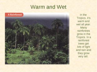 Warm and Wet In the Tropics, it's warm and wet all year. Many rainforests gro