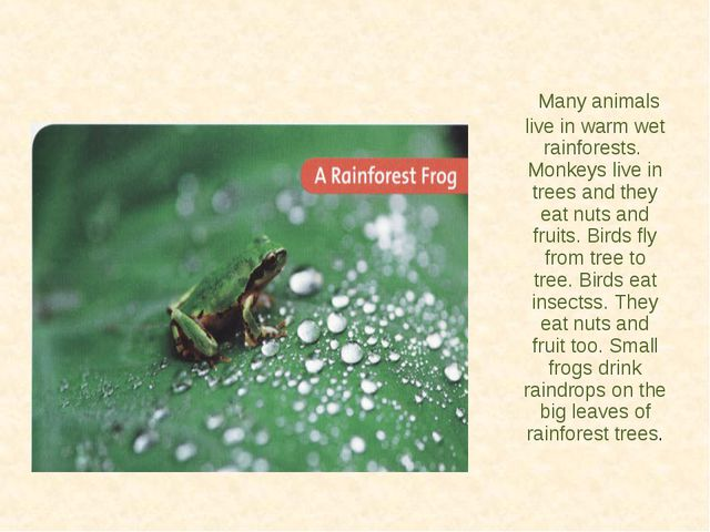 Many animals live in warm wet rainforests. Monkeys live in trees and they ea...