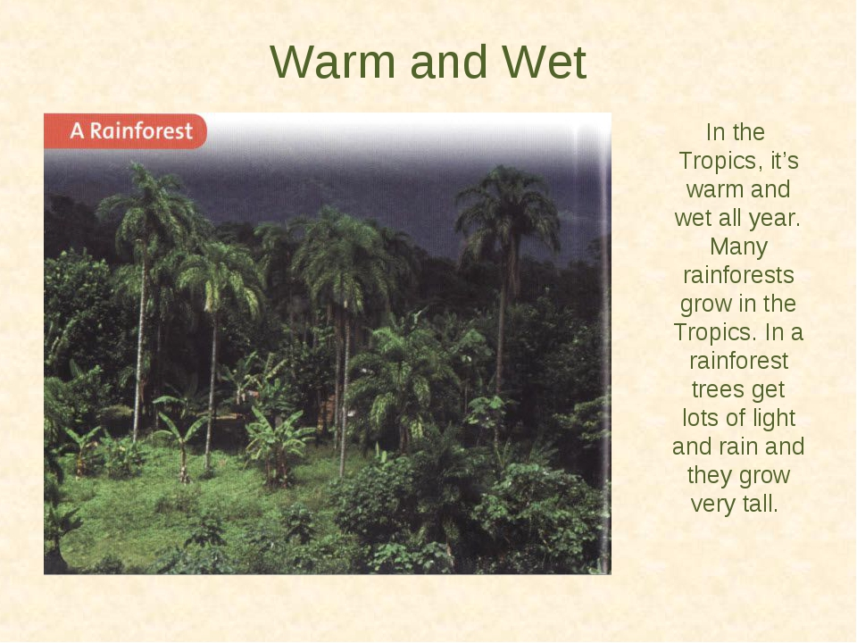 Warm and Wet In the Tropics, it's warm and wet all year. Many rainforests gro...