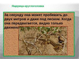 Ящерица-круглоголовка. За секунду она может пробежать до двух метров и даже