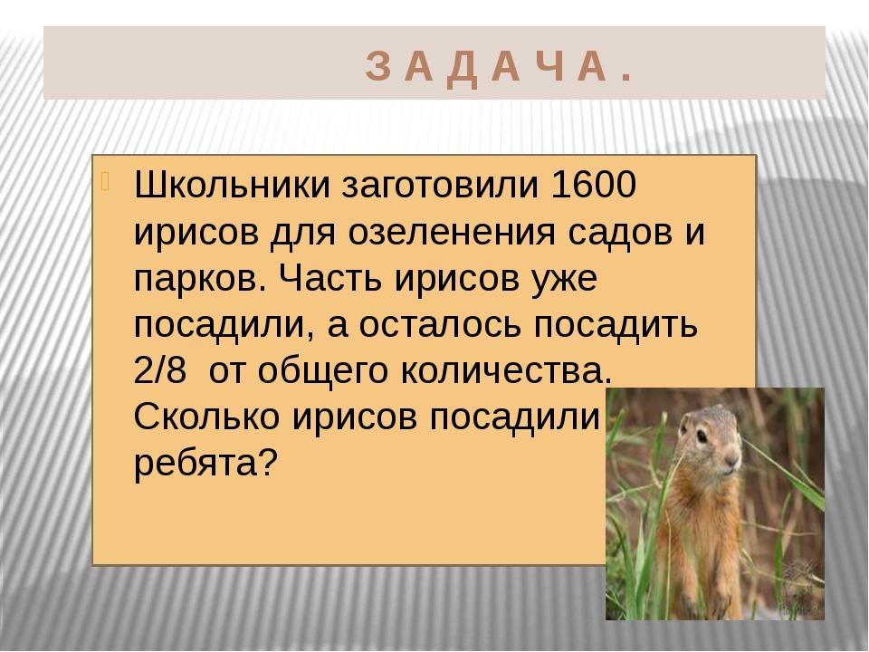 З А Д А Ч А . Школьники заготовили 1600 ирисов для озеленения садов и парков...