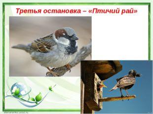 Третья остановка – «Птичий рай»