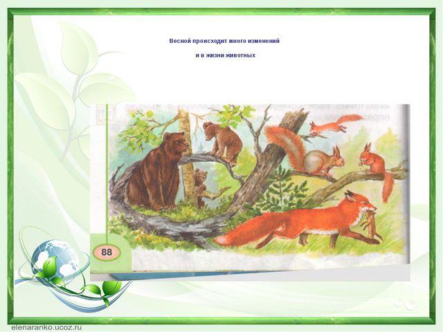 Весной происходит много изменений и в жизни животных