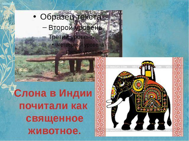 Слона в Индии почитали как священное животное.