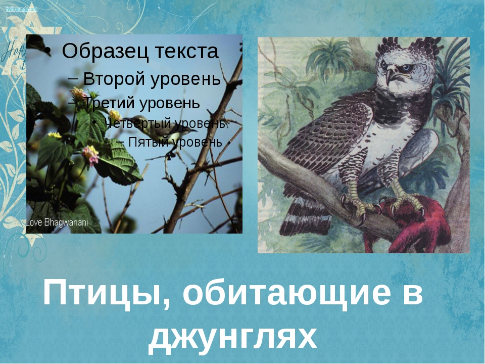 Птицы, обитающие в джунглях