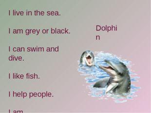 I live in the sea. I am grey or black. I can swim and dive. I like fish. I he