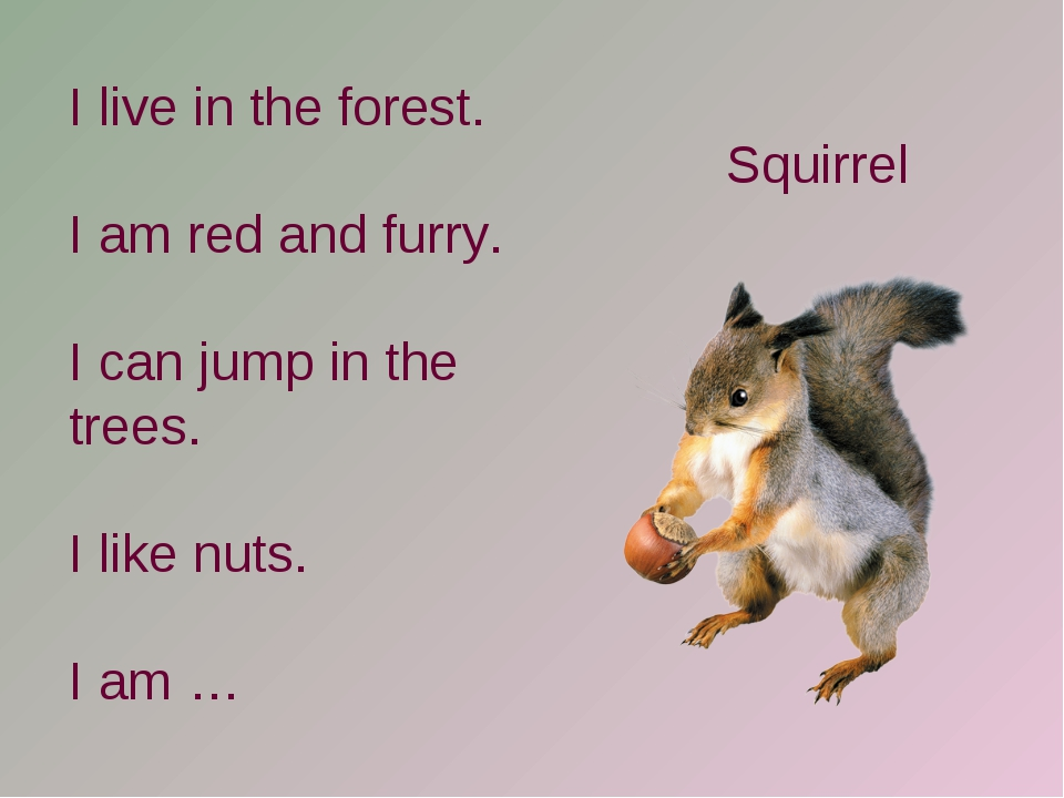 I live in the forest. I am red and furry. I can jump in the trees. I like nut...