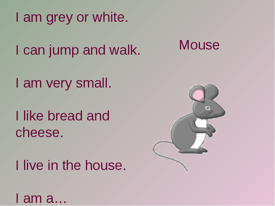 I am grey or white. I can jump and walk. I am very small. I like bread and ch...