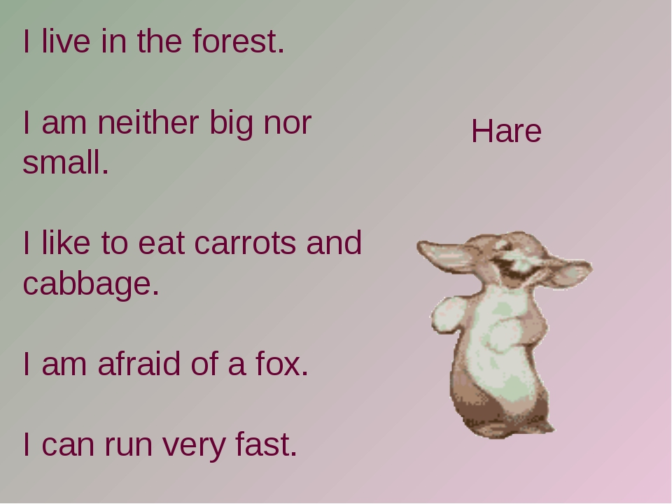 I live in the forest. I am neither big nor small. I like to eat carrots and c...