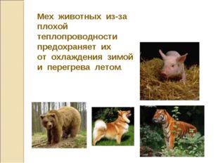 Мех животных из-за плохой теплопроводности предохраняет их от охлаждения зимо