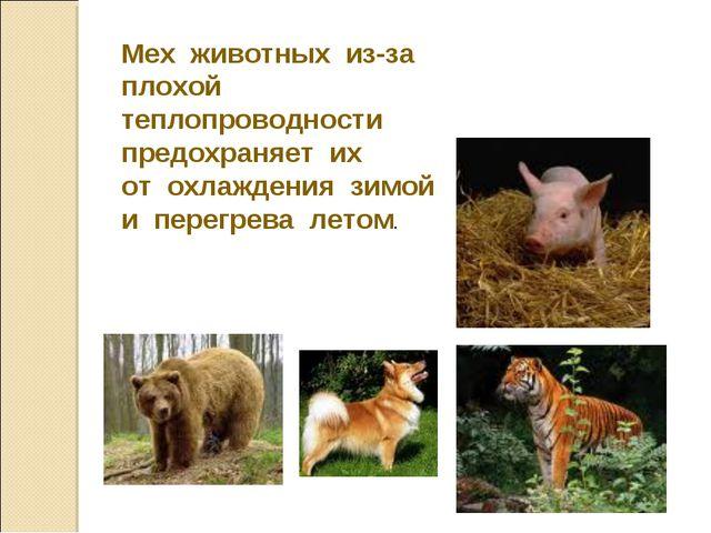 Мех животных из-за плохой теплопроводности предохраняет их от охлаждения зимо...