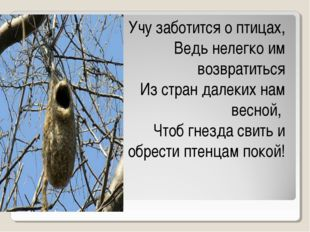 Учу заботится о птицах, Ведь нелегко им возвратиться Из стран далеких нам вес