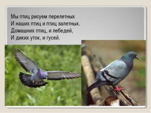 Мы птиц рисуем перелетных И наших птиц и птиц залетных. Домашних птиц, и лебе