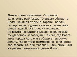 Волга- река кормилица. Огромное количество рыб (около 70 видов) обитает в В