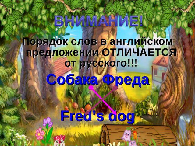 Порядок слов в английском предложении ОТЛИЧАЕТСЯ от русского!!! Собака Фреда...