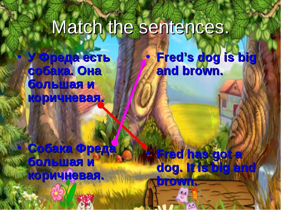 Match the sentences. У Фреда есть собака. Она большая и коричневая. Собака Фр...