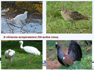 В области встречается 256 видов птиц